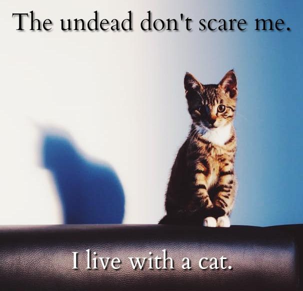 halfway-dead-cat-graphic
